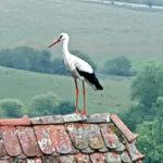 BirdWatching in Romania