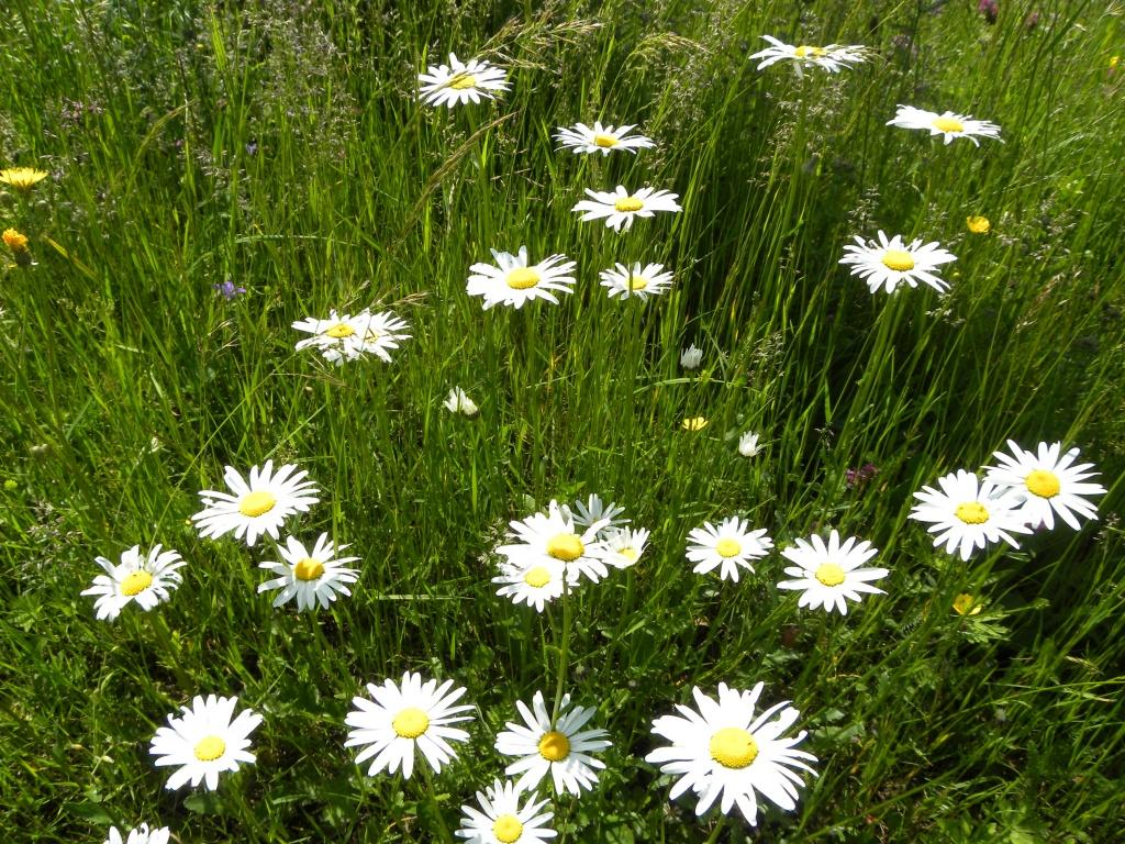Feerie de Flori pe Munte