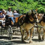 gourmet tour with horse-drawn carriage