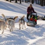 the husky dogs experience